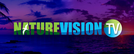 NatureVision TV  desktop